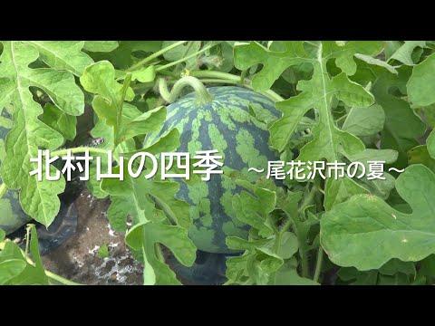 北村山の四季 ~尾花沢市の夏~