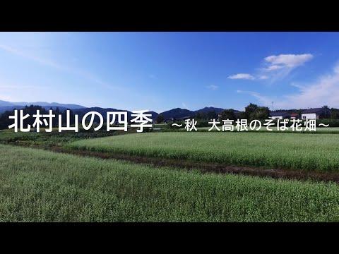 北村山の四季 ~秋 大高根のそば花畑~
